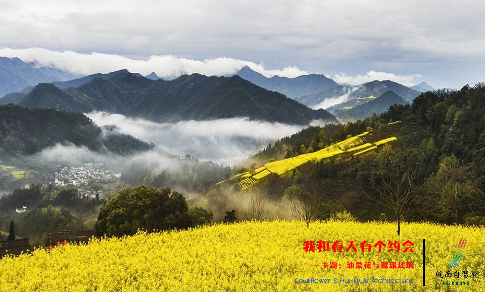 你不知道的皖南山区深处,隐世油菜花盛景!